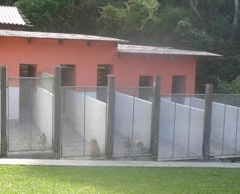 Hospedagem Pet Porto Alegre